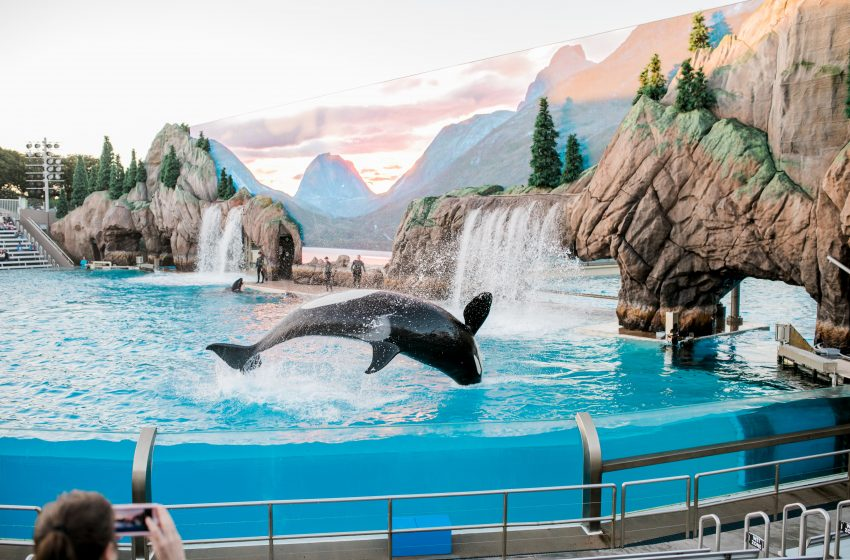 Whales at Seaworld Take 147 People Hostage as a Result of their Mistreatment
