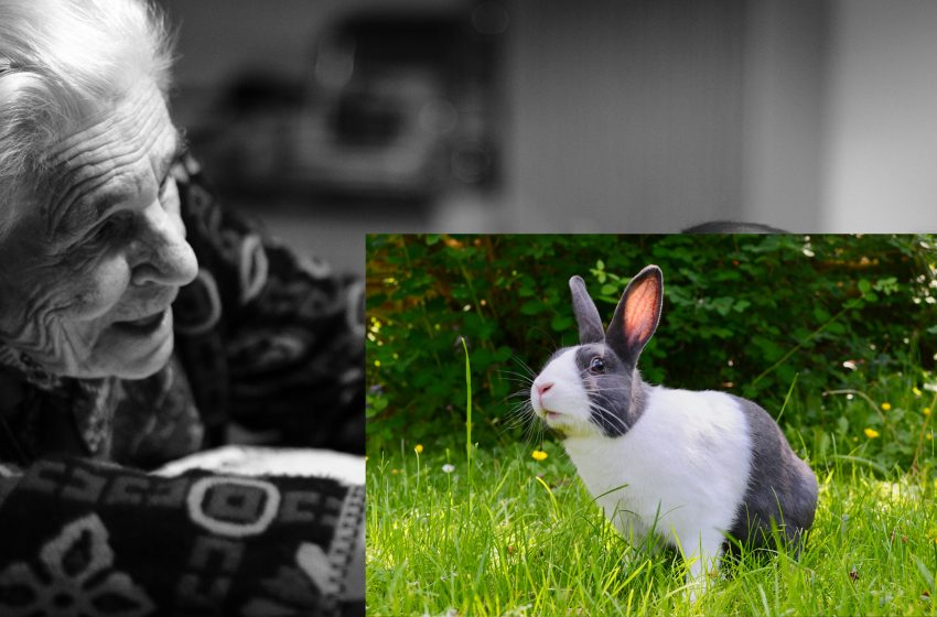 Family Disowns Grandmother After She Innocently Murdered and Mutilated Rabbits that Went in Her Garden