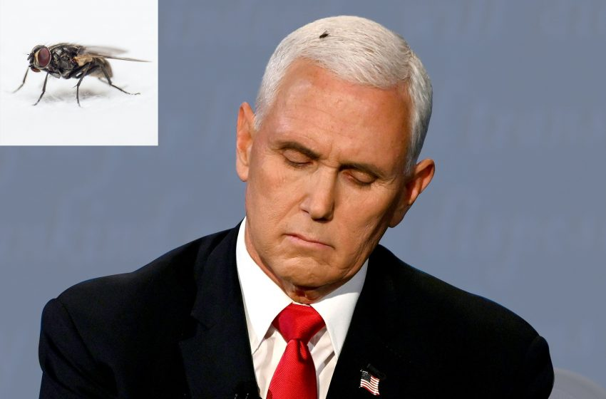 Fly Who Landed On Mike Pence's Head During the Debate Says 'He Was the a Best Tasting Piece of Shit He's Ever Had' and 'Left Him in a State of Euphoria'