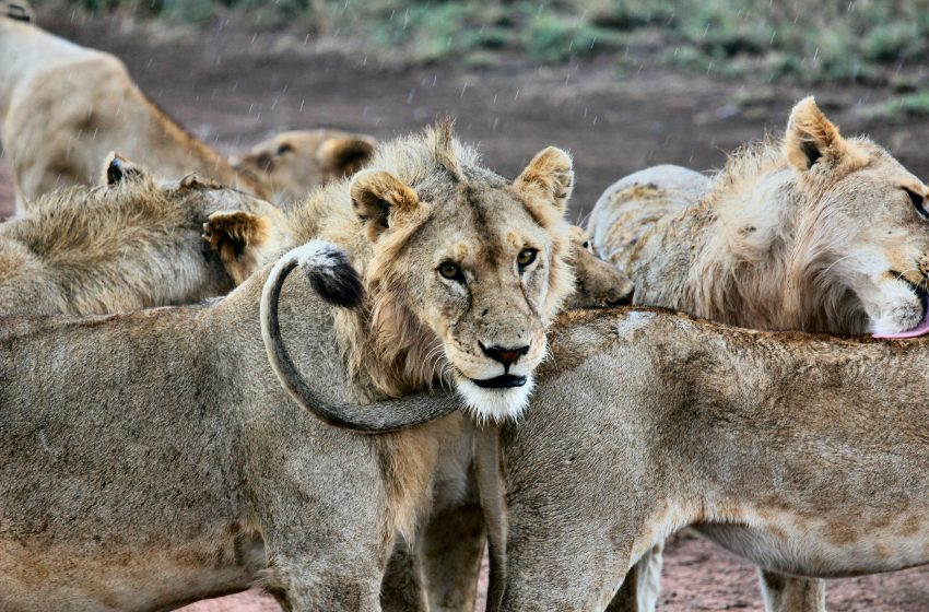 The Tables Have Turned as Big Game Hunters in America are Being Hunted by Big Game From Africa