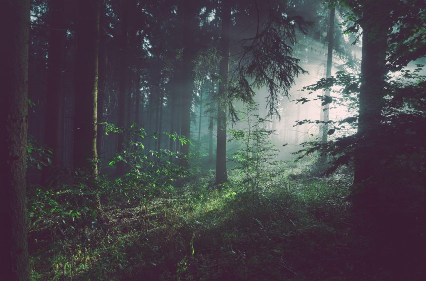Bored Man Decides to Follow Random Footsteps in Forests to See Where They Go For Rest of Life